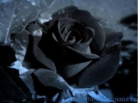 anunt deces Mariana Munteanu