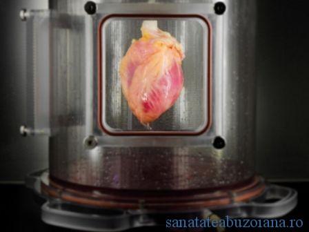 inima lab.