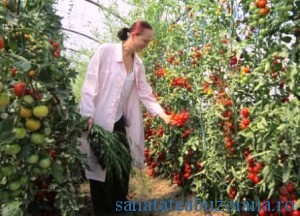 Burnichi - tomate SCDL _1365