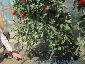 este foarte important cum se hraneste planta _1326