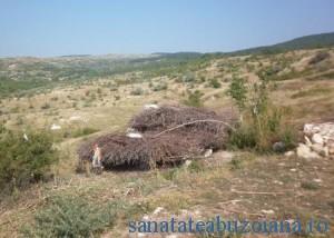 Gunoaie, maracini si hoituri in zona Tezaurului