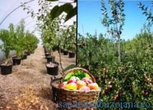De sanatatea pomilor depinde cea a fructelor