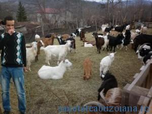 George-capre stana