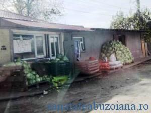 varza-gogonele_2927
