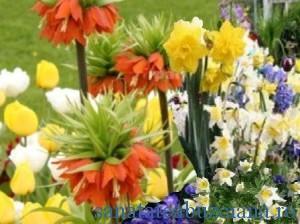 floarea-pastelui-narcise-lalele-zambile