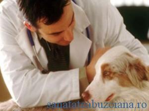 student medicina veterinara