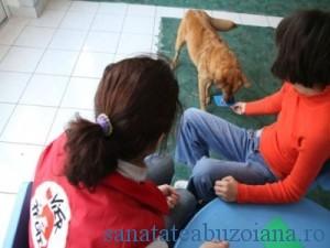 terapie cu caini  (2)