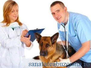 medici veterinari