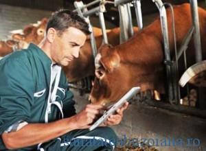 veterinar - bovine