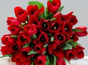 lalele-rosii